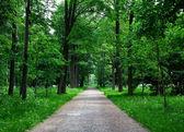 Weg in den Wald — Stockfoto