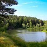 Small River Nature Landscape — Stock Photo
