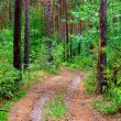 Path in the Pine Wood — 图库照片