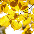 Autumnal Leafs — Stock Photo