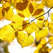 Stock Photo: Autumnal Leafs