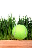 Tennis Ball on Grass background — Stock Photo