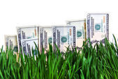 Dollars growing concept — Stock Photo