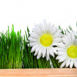 Wooden Board and Grass and Flowers — Stock Photo