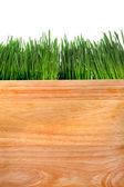Grass and Wooden Board — Stock Photo