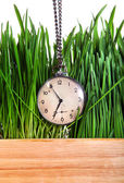 Vintage Watch in Grass — ストック写真