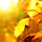 秋の葉のクローズ アップ — ストック写真