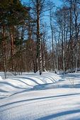 Paysage d'hiver en forêt — Photo
