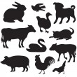 Stock Vector: Silhouettes of hand drawn farm animals. Dog, cat, duck, rabbit, cow, pig, cock, hen, swan, puppy, kitten.