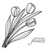 Tulip flowers sketch. — Stock Vector