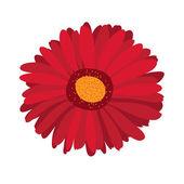 Large pink flower gerbera — Stock Vector