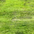 Old Green Grass — Stock Photo