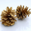 Pine cones — Stock Photo #1302724