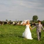 A honeymoon — Stock Photo #1322792