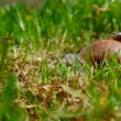 Snail crawling on the grass — Stock Video