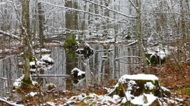 Swamp in the forest, the first snow — Stockvideo