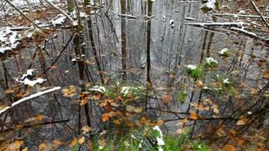 Swamp in the forest, the first snow — Стоковое видео