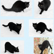 Black cats playing in the snow collage — Stock Photo