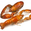 Stock Photo: Yabby or Freshwater Lobster