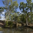 Creek in Central Queensland — Stock Photo