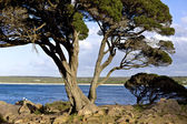 Cape Naturaliste Banker Bay — Stock Photo