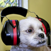 Protective Ear Muffs — Stock Photo