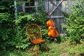 Acoustic cello. — Stock Photo