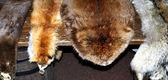 Animal pelts. — Stock Photo