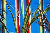 Patrón abstracto de la planta. — Foto de Stock