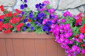 Flower planter. — Stock Photo