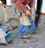 Male farrier. — Stock Photo