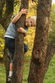 Smiling blond six-year boy in a tree in an autumn park. — Stock Photo