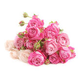 Heap of roses isolated on white — Stock Photo