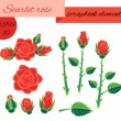 Stock Vector: Scarlet rose scrapbook elements