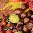 Chestnuts on autumn leaves — Stock Photo #13808193
