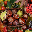 Chestnuts on autumn leaves — Stock Photo