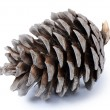 Fir cone isolated on white background - Stock Photo