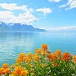 flowers against mountains and lake geneva from the embankment in montreux. switzerland — Stock Photo