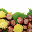 Chestnuts on autumn leaves isolated on white background — Stock Photo