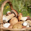 Basket with boletus edulis on grass — Stock Photo
