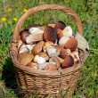 Basket with boletus edulis on grass - Foto de Stock