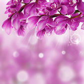 Orchid Flower border design close up — Stock Photo