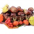 Stock Photo: Autumn still-life - chestnuts and mountain ash