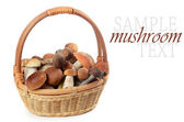 The raw boletus edulis in basket — Stockfoto
