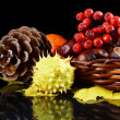Autumn still-life - chestnuts and a mountain ash — Foto Stock