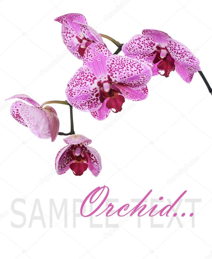 Открытка поздравления с орхидеями