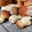 Stock Photo: Raw boletus edulis background