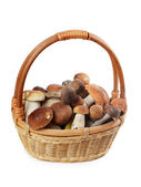 The raw boletus edulis in basket — Stock Photo