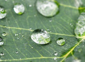 Rain drop on a leaf — Stock Photo