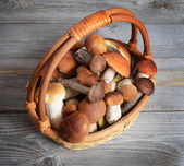 Boletus edulis in basket — Stock Photo